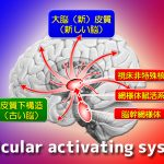 網様体賦活系・Reticular Activating System